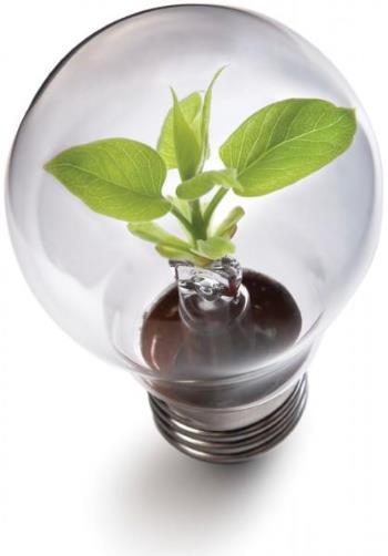 Green Bulb.jpg