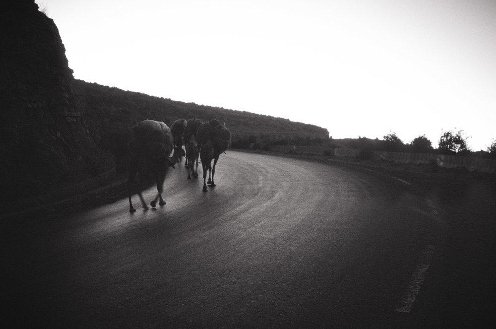 Salt Worker Camel Train // Mek'ele, Ethiopia // 2011 // 35mm Film