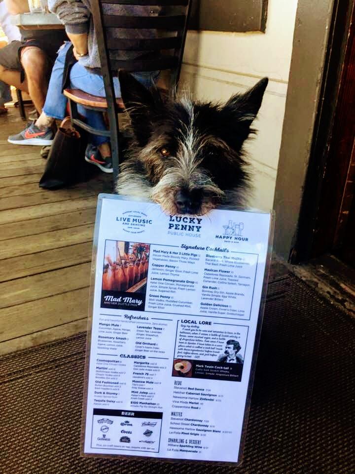 Puppy menu.jpg
