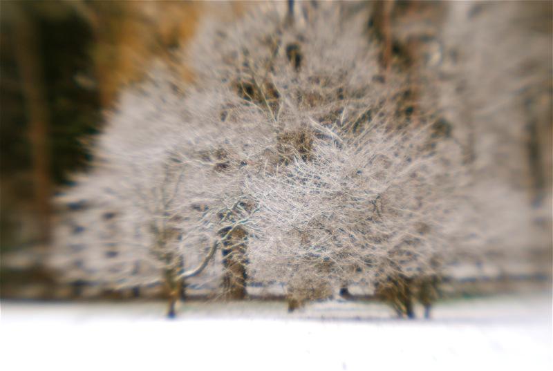snow lensbaby.jpg