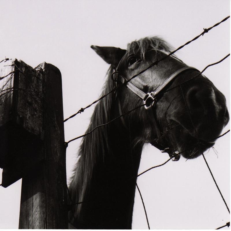 horse twin reflex.jpg