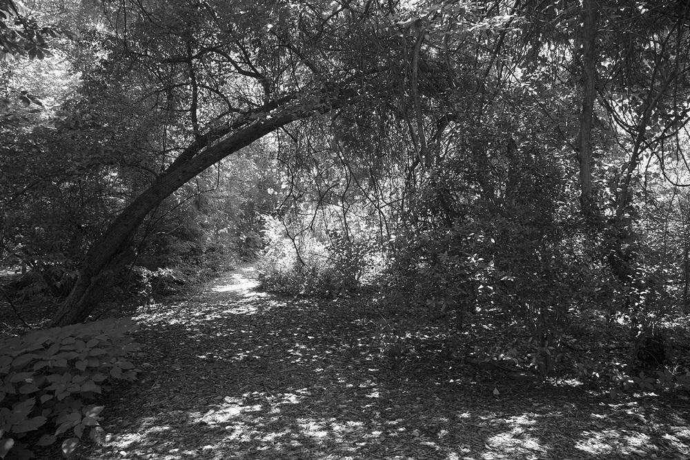 TreeswithLightSpots.jpg