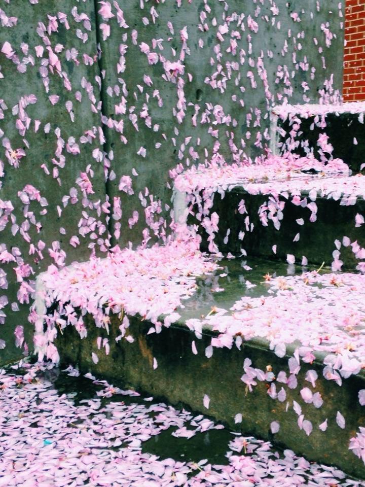 Raining Spring.