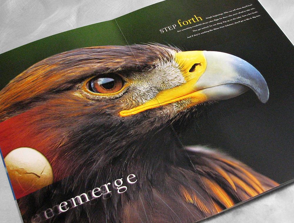 Rhino Eagle Spread.jpg