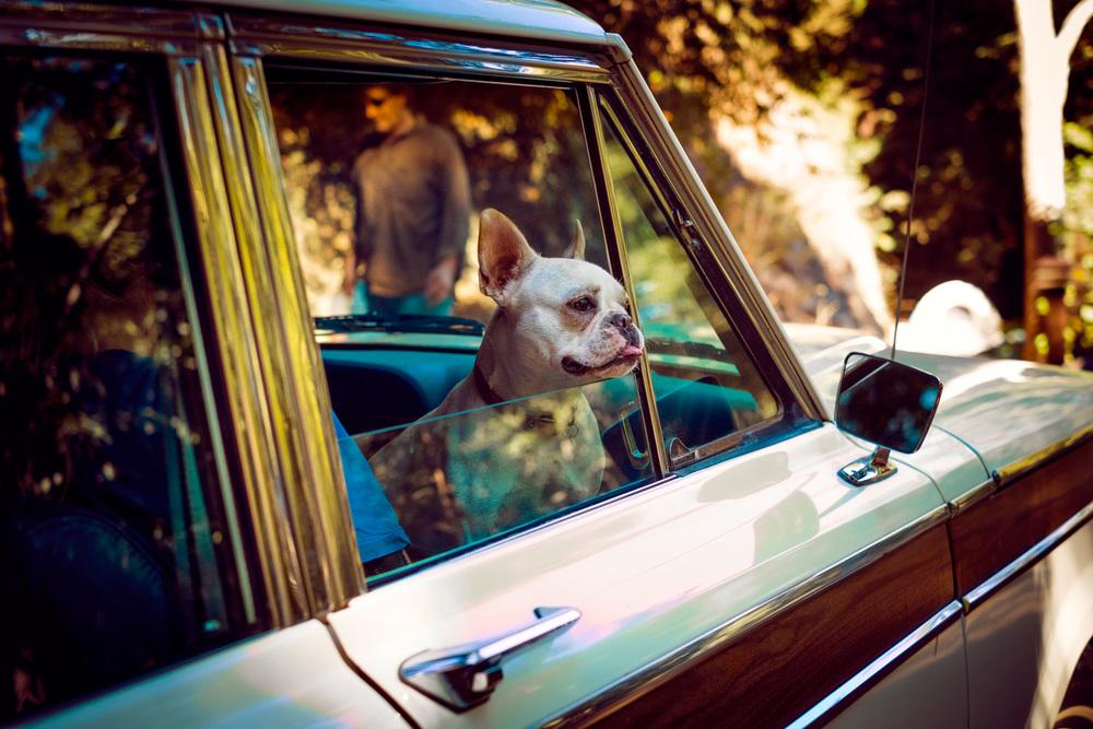 Brokaw_Julia_BigSur_Terrier.jpg