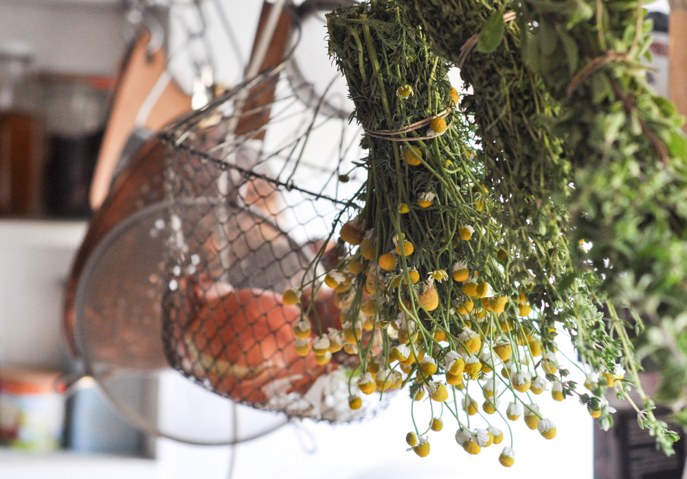 Freeandnative_Drying_Herbs_3b.jpg