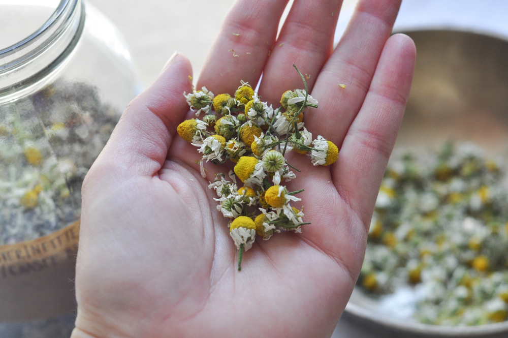 Freeandnative_chamomile_tea_blend_3.jpg