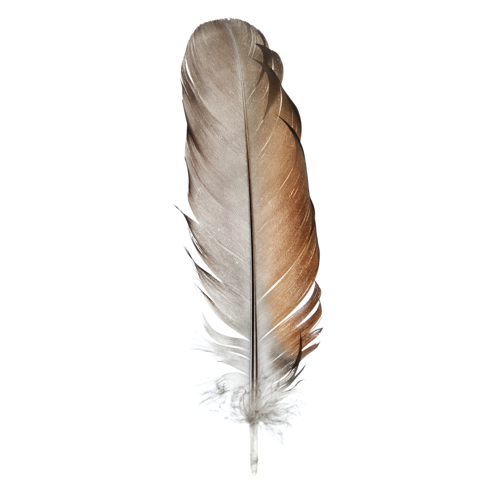 to-be-magnetic-feather