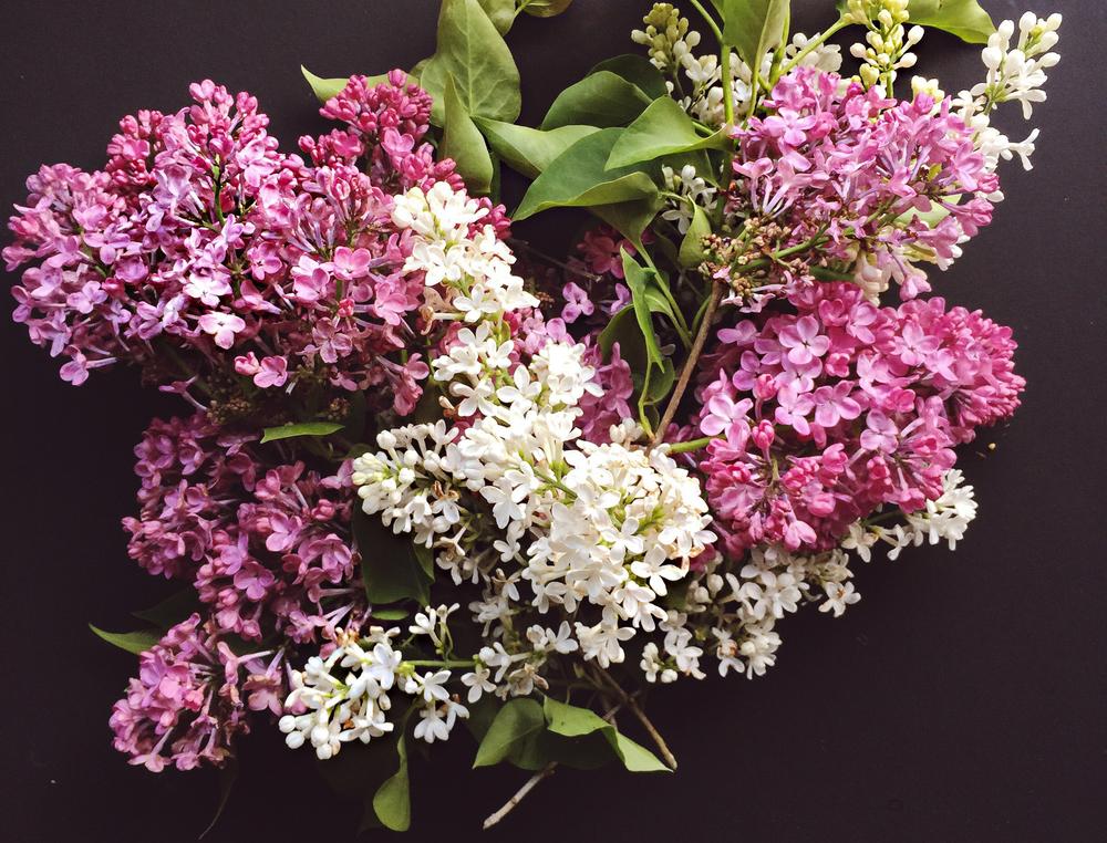 Lilac Body oil 1.jpg