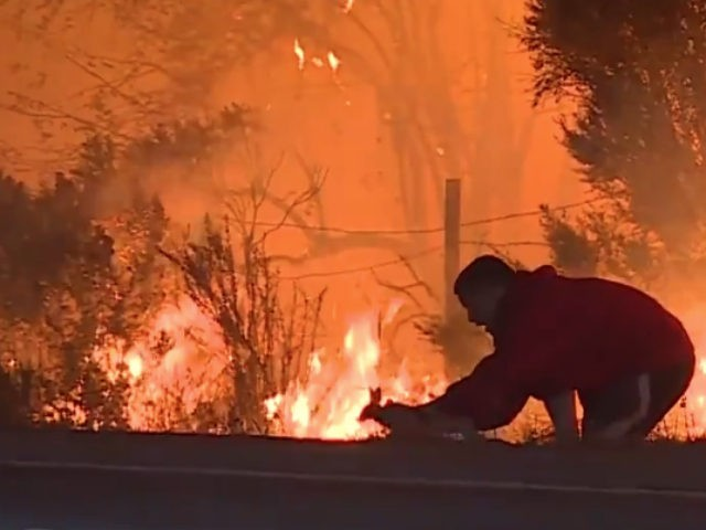 man-saves-wild-rabbit-calif-wildfires-screenshot-640x480.jpg