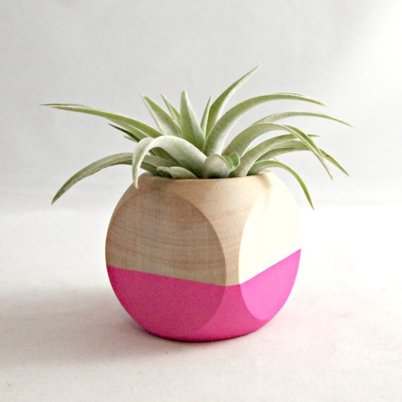geometric air plant cube  by sea and asters