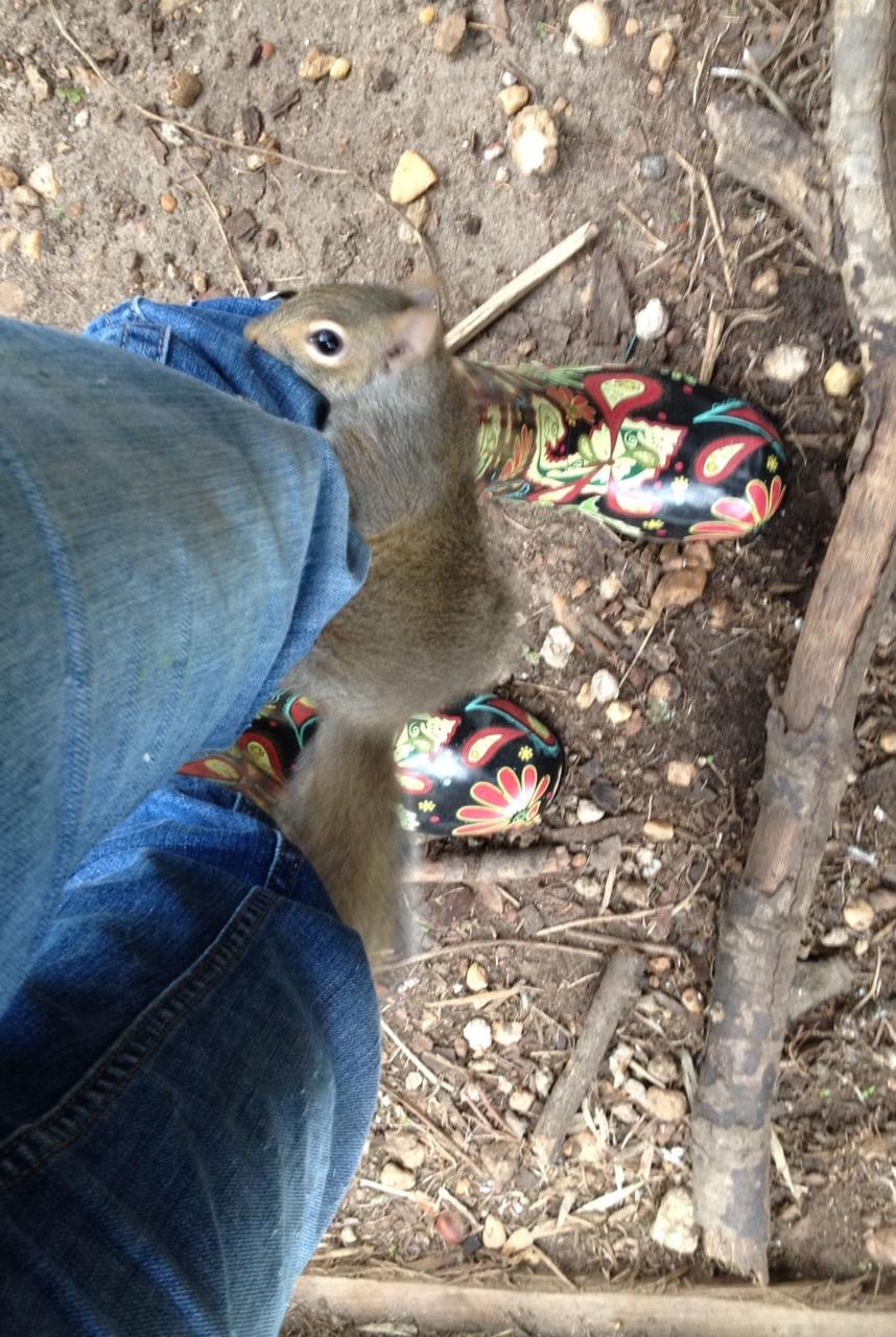 a squirrel climbing on Anna