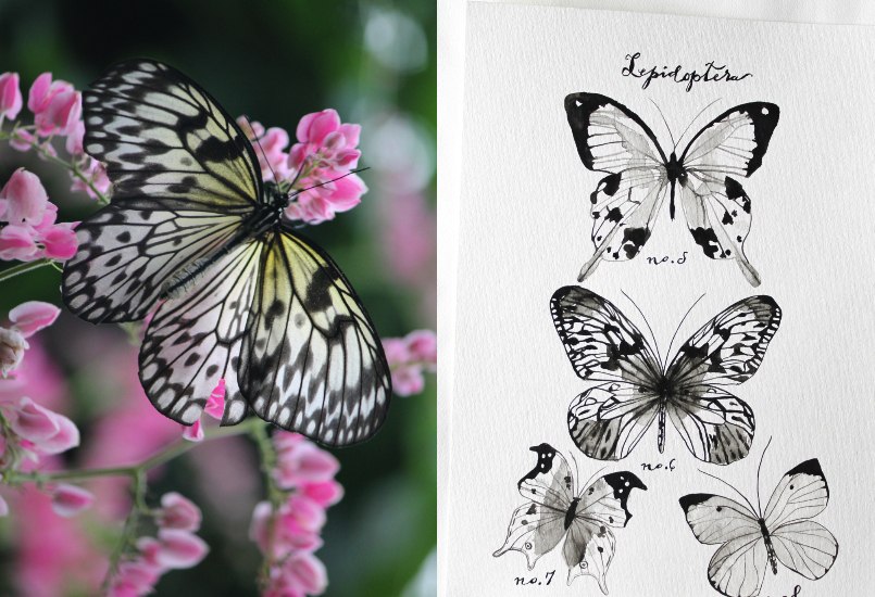 nature inspirations: butterfly  print
