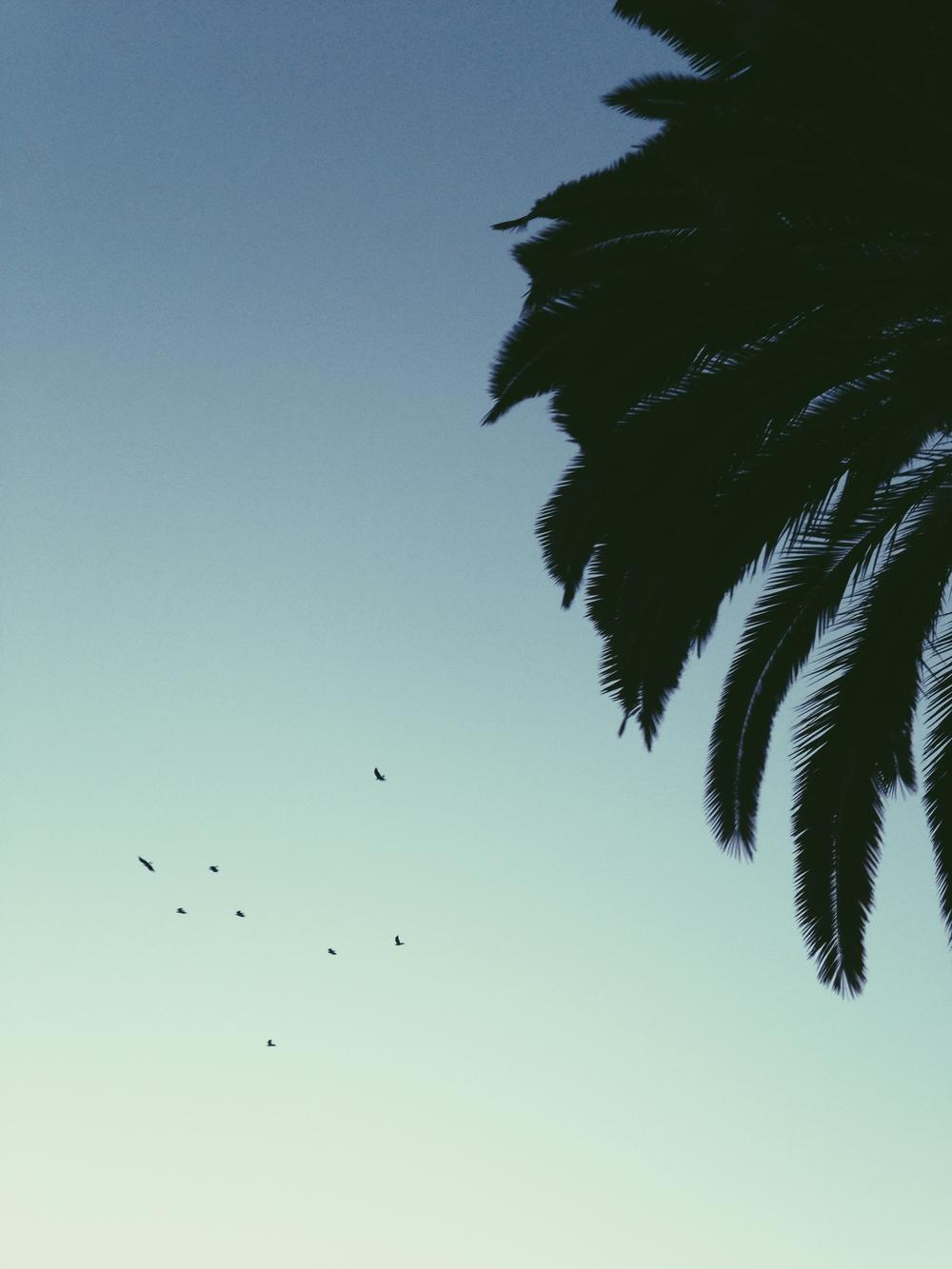 Los Angeles, California where Gossamer & Violet is based.