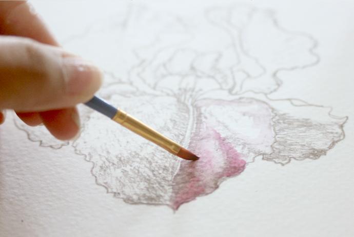 painting an iris