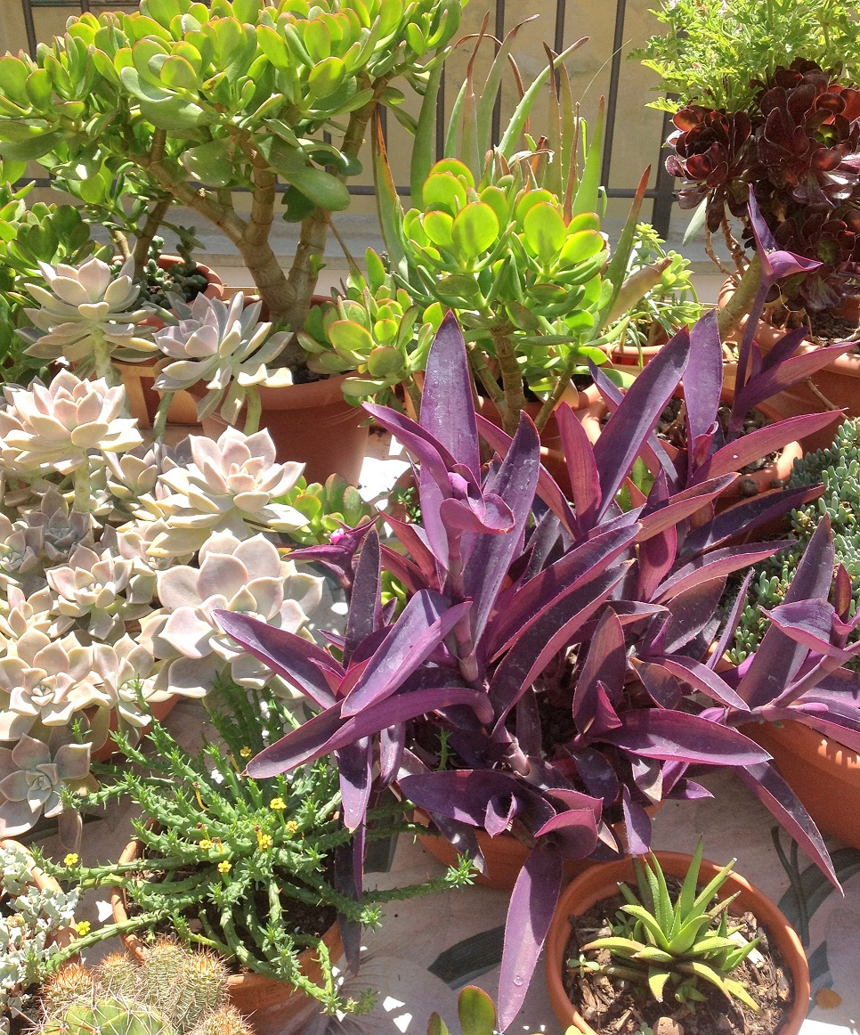 a sampling of plants on the terrace