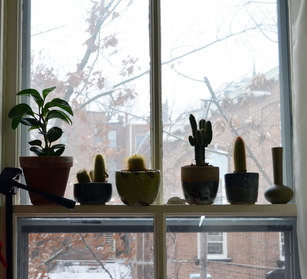 a row of cacti in the studio