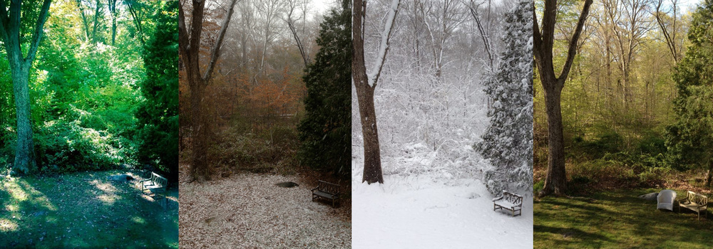 The four seasons in the backyard