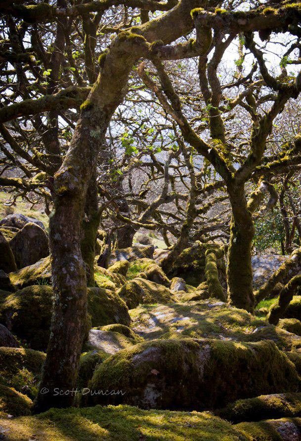 wistmans-wood-devon-england.jpg