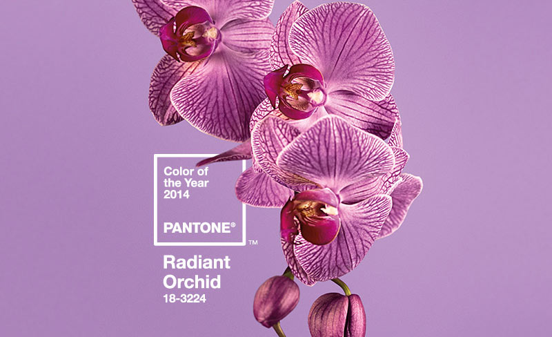 radiant orchid color of the year 2014.jpg