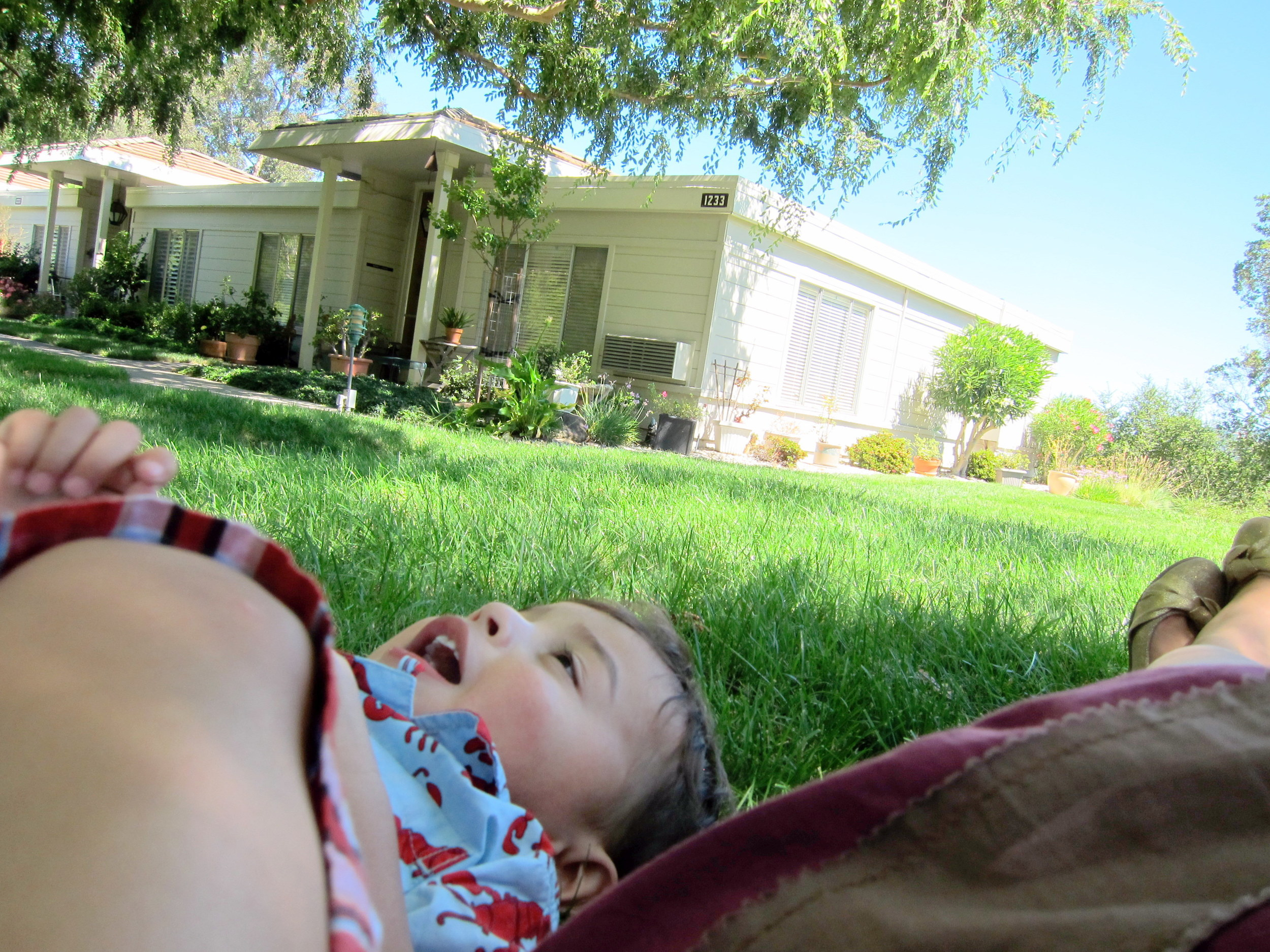 Lazy on the Lawn