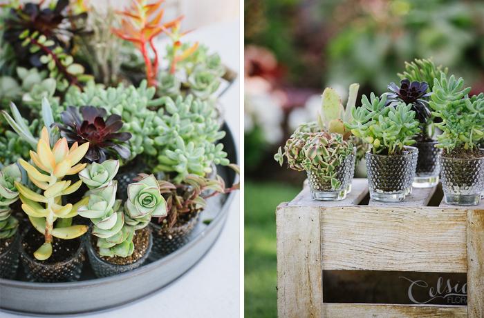 Succulent guest favors by Celsia Floral.