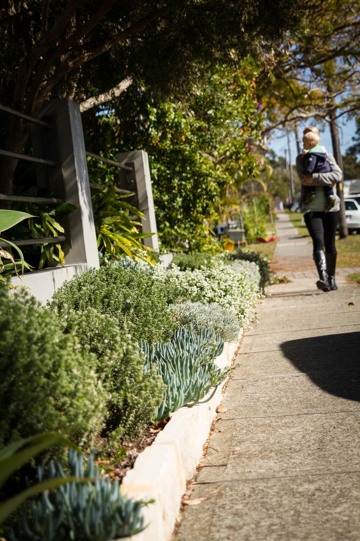 cronulla_residential_garden_design 11.jpg