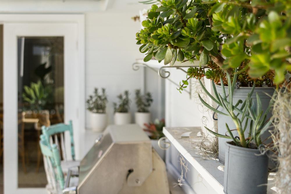 cronulla_residential_garden_design 15.jpg