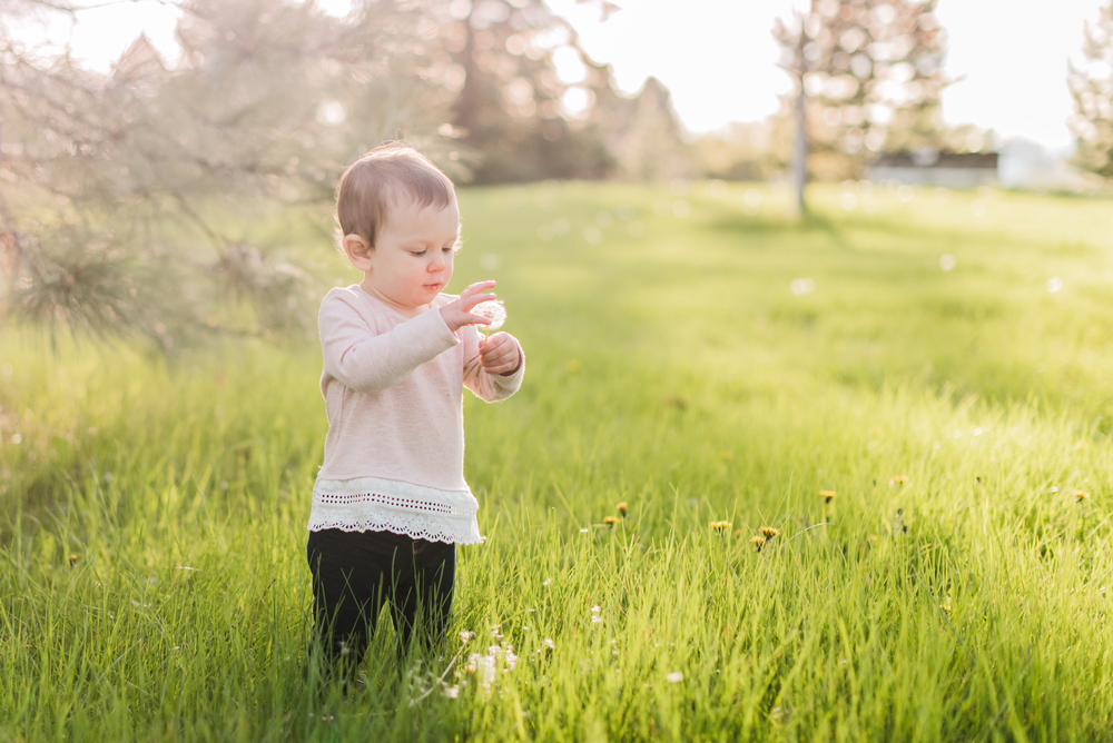 dandelion girl, spring, 2015