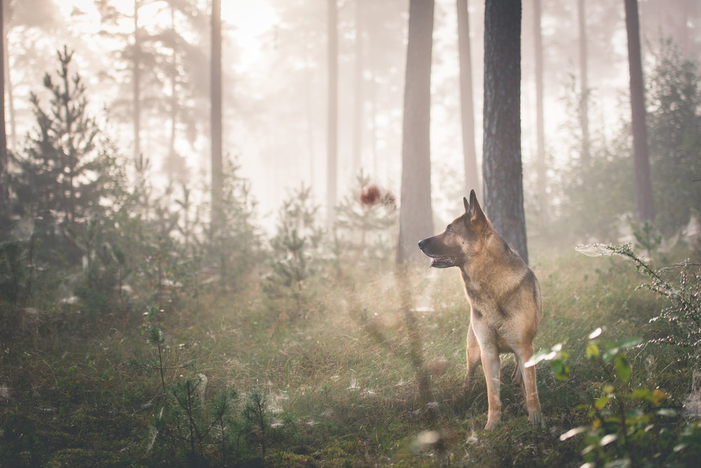 hundbilder