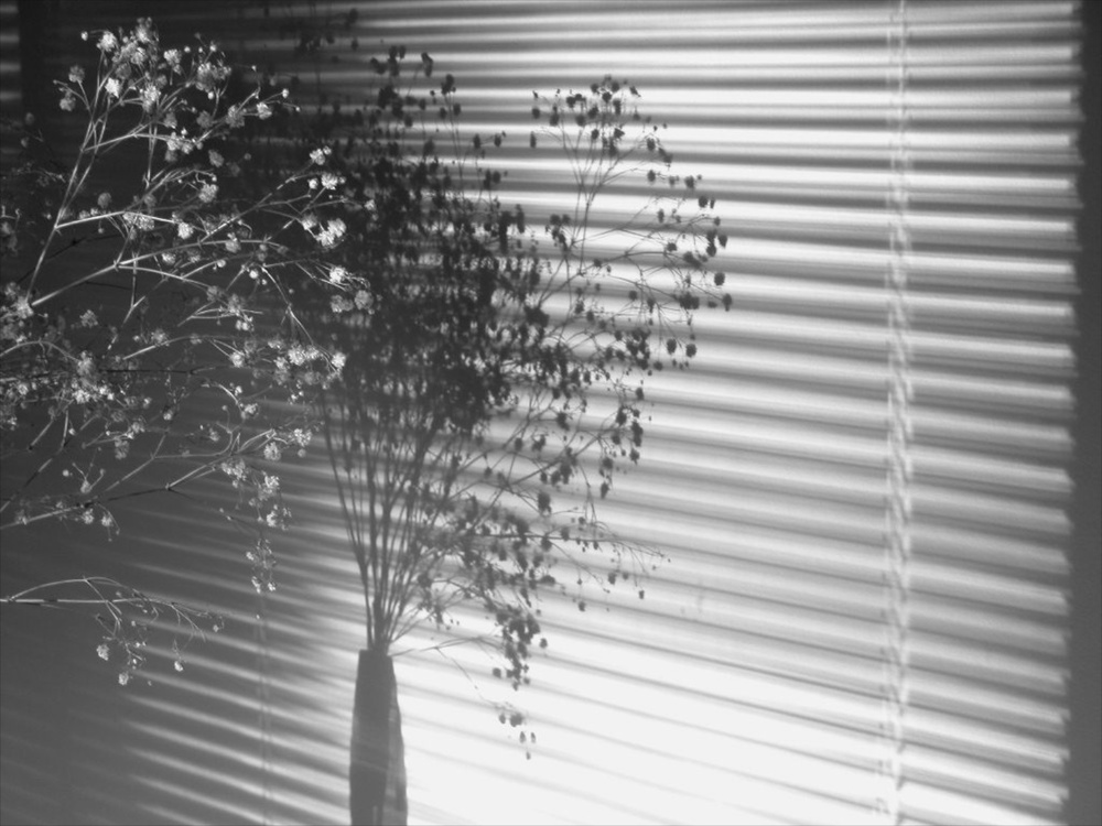 Blinds Bethesda 11/2002   © photo by AJ Weissbard