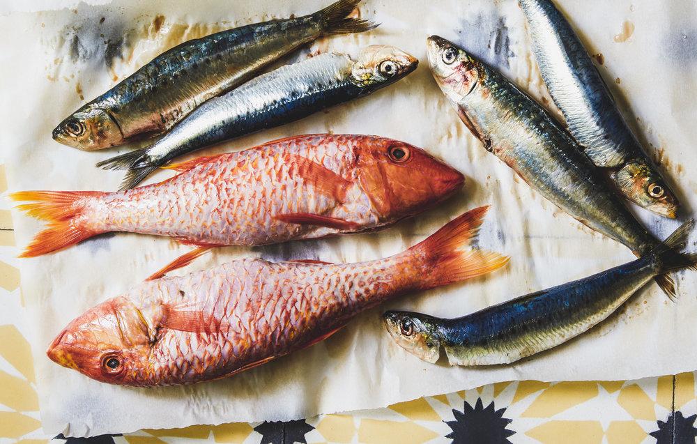 Smart_DBO_Fish.jpg