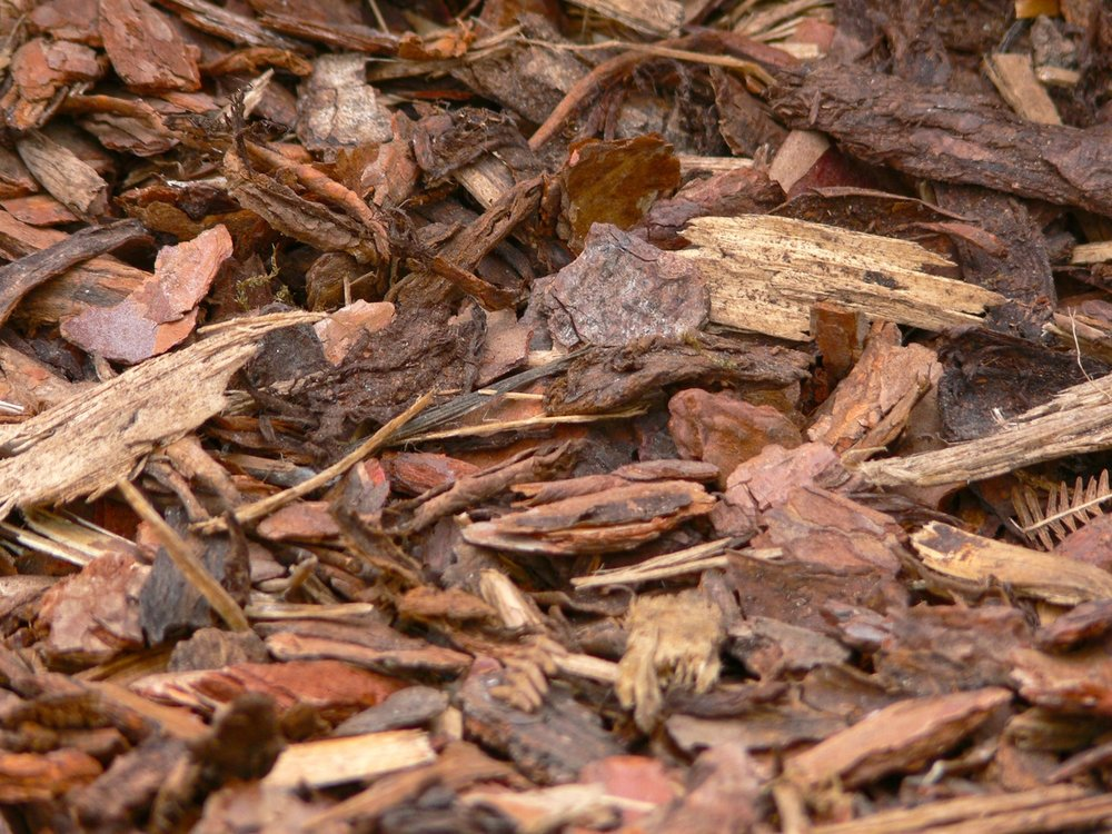 tree-plant-wood-ground-texture-leaf-856324-pxhere.com.jpg