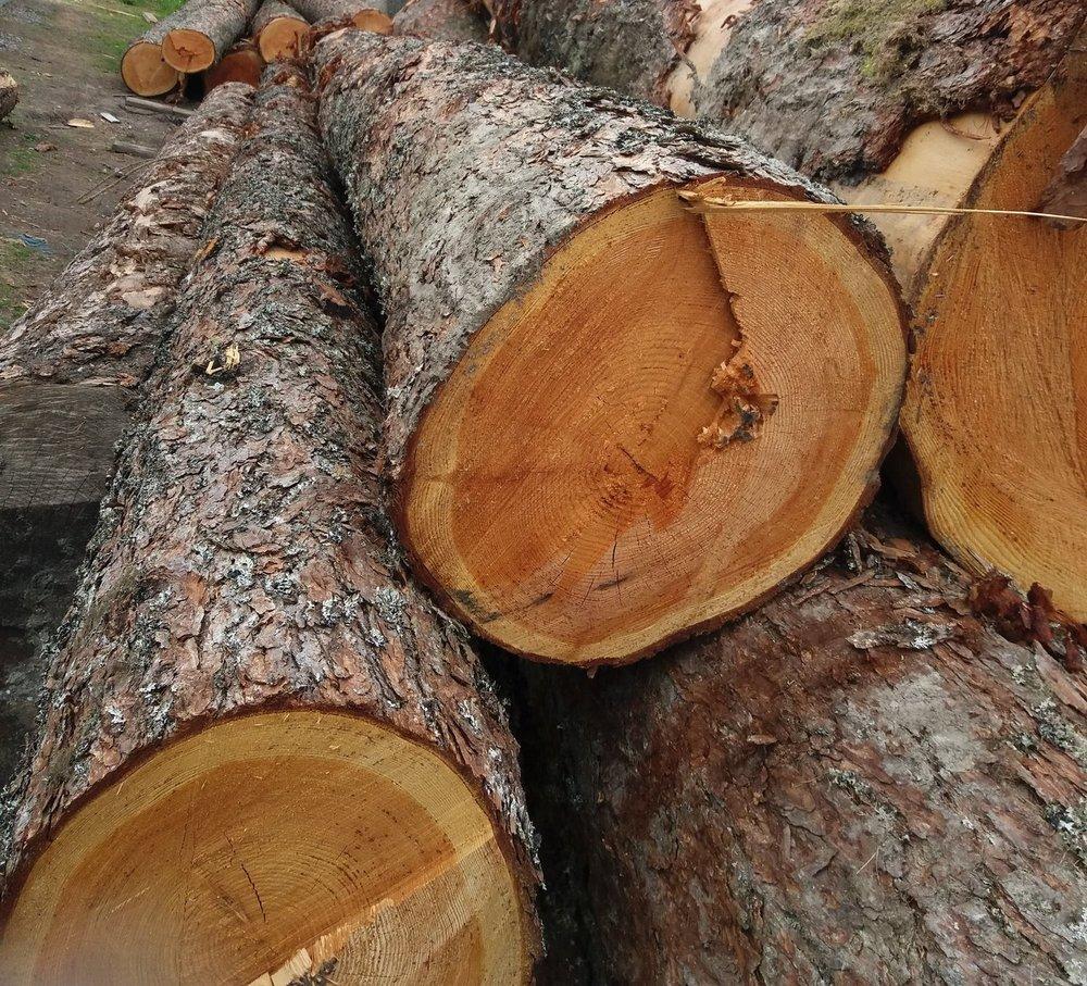 felled-oak-tree-trunks-en-route-to-a-saw-mill-c256a4.jpg