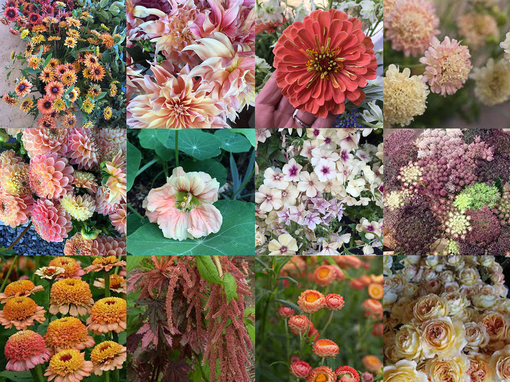 Collage of some of my favorite blooms in this color palette. Many I am hoping to grow myself this summer.