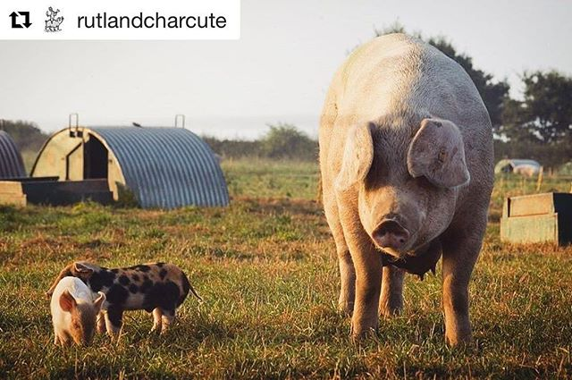 Recently we took on  @rutlandcharcute as a client, my kind of business all over- carefully sourced high welfare meat turned into amazing cured and air dried products, go and follow them and try their stuff, it's simply outstanding and produced right here in the East Midlands #charcuterie #rutlandcharcuterie #slowfood #ukfarming #foodstyling #foodphotography