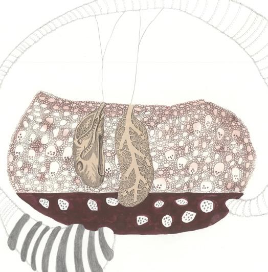 Pulmo Tumefacians  (detail)