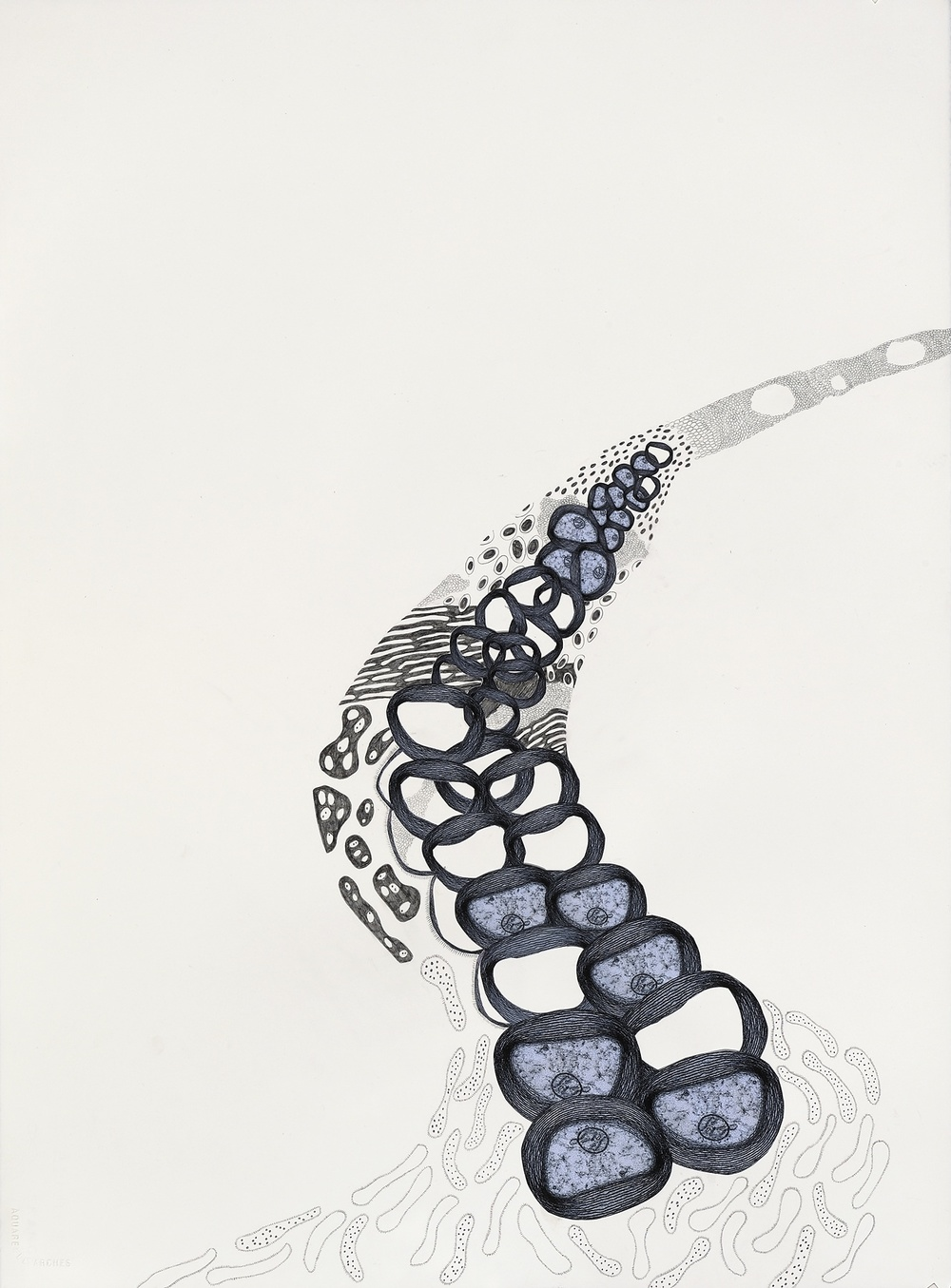 "Genetic Erosion , gouache, graphite, collage on paper, 30"" x 22"", 2010"