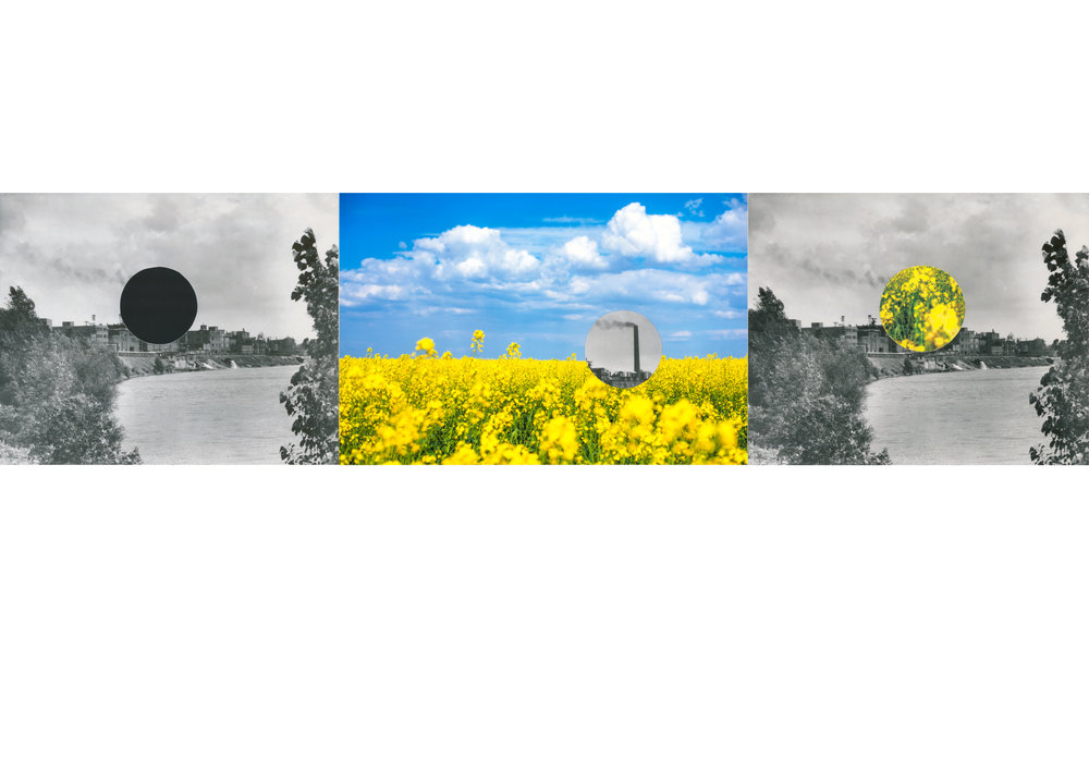 "Canola Fields,  collage, cut-outs, archival pigment print, 23"" h x 32"" w, 2018"