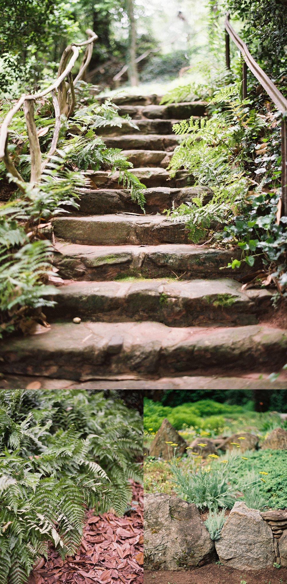 dunaway-gardens-ferns