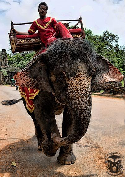 Angkor Elephant Camera: Canon 5D Mk. III