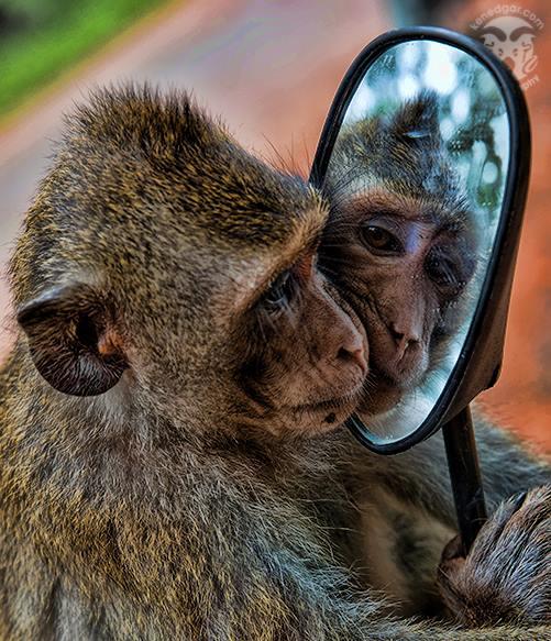 Angkor Monkey Camera: Canon 5D Mk. III