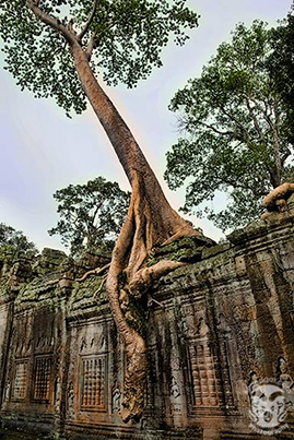 Location: Temples of Angkor