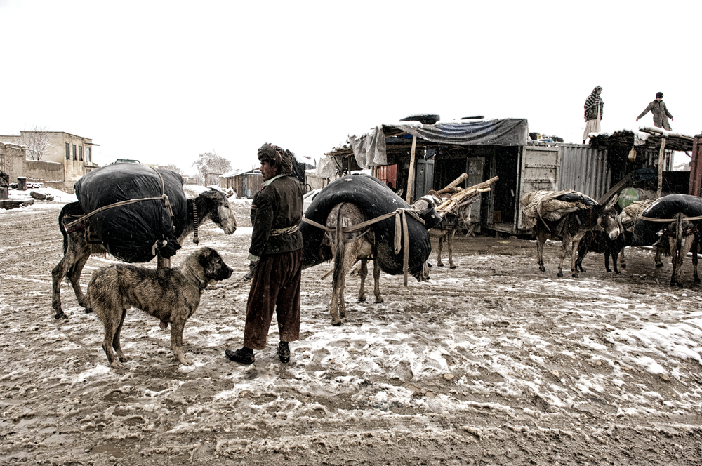 Nearly half the villages in western Afghanistan had been cut off from the major cities due to heavy snowfall, the cold snap hit the agricultural and livestock industry hard with more than 130,000 cattle perishing in the freezing temperatures Faryab Province, Afghanistan, February 26, 2008. (Photo/Mark Pearson)