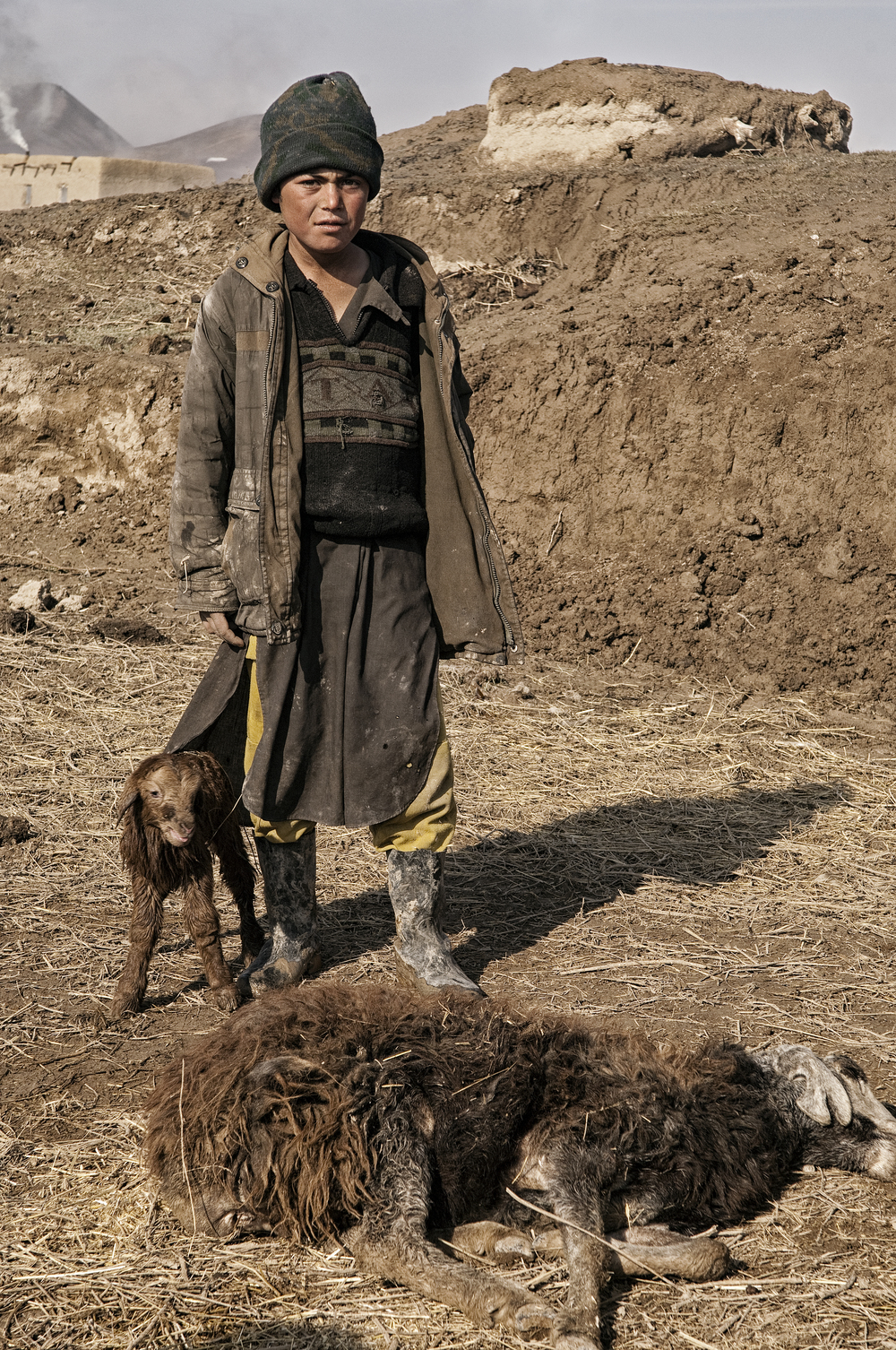 A young Afghan boy with his dead cattle in the village of Qasabach Qala, Faryab Province, Northwest Afghanistan on Friday 15th February, 2008.