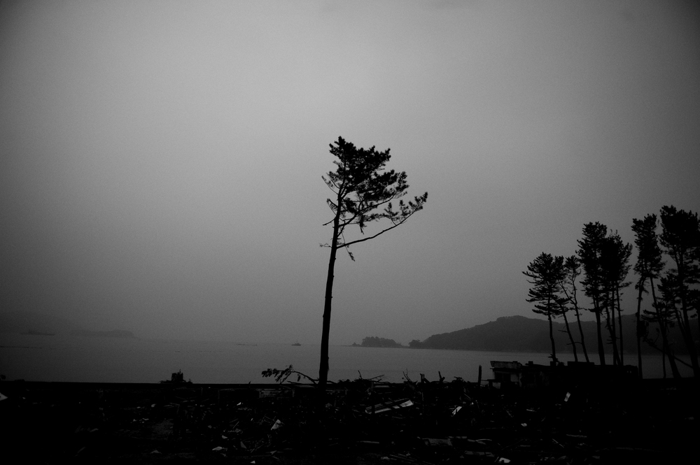 A Japanese pine tree is all that remains on the beach after the March 11 tsunami devastated the coast of Yamada, Iwate Prefecture, Japan, March 19, 2011. 446 residents died in the small town of Yamada. (Photo/Mark Pearson)