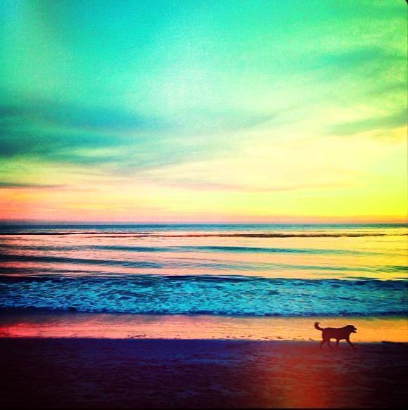 dog sunset.jpg