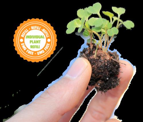 Non-GMO GrowUps™ Refills (Individual) — UrbnEarth Outdoor & Small ...