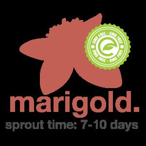 Marigold.png