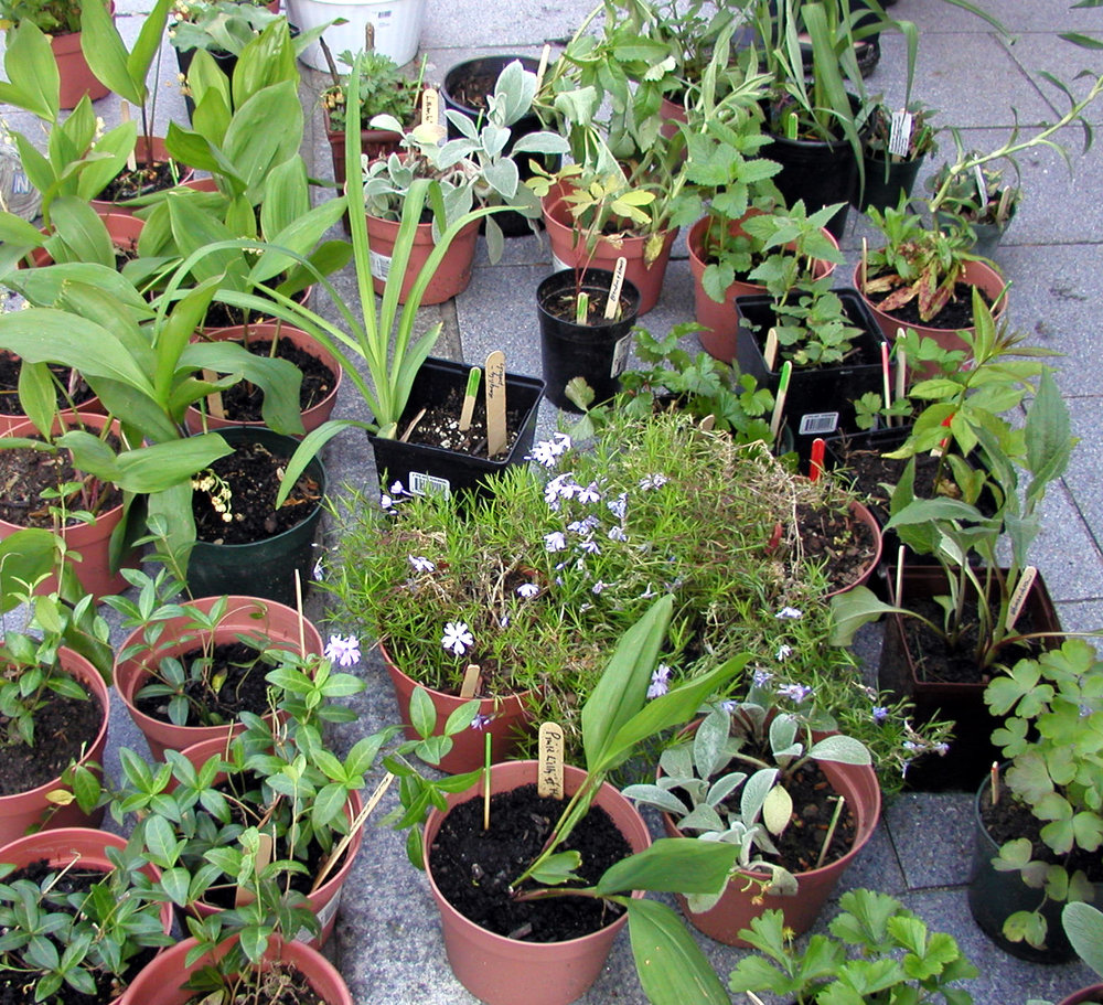 Hundreds of great plants... -